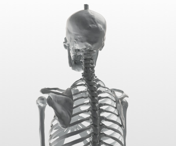 Skeleton scan
